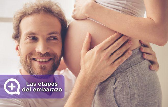 Las etapas del embarazo. Obstetricia y ginecología, día mundial de la embarazada. mediquo, tu amigo médico, chat médico.