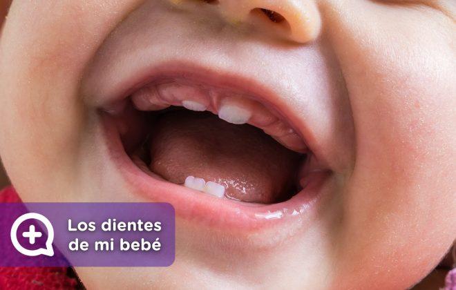 Los primeros dientes de mi bebé, dolor, fiebre, molestias. MediQuo, tu amigo médico. Chat médico. Pediatría