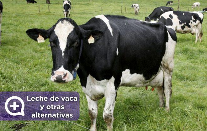 Leche de vaca y otras alternativas. MediQuo. Tu amigo médico. Chat médico.