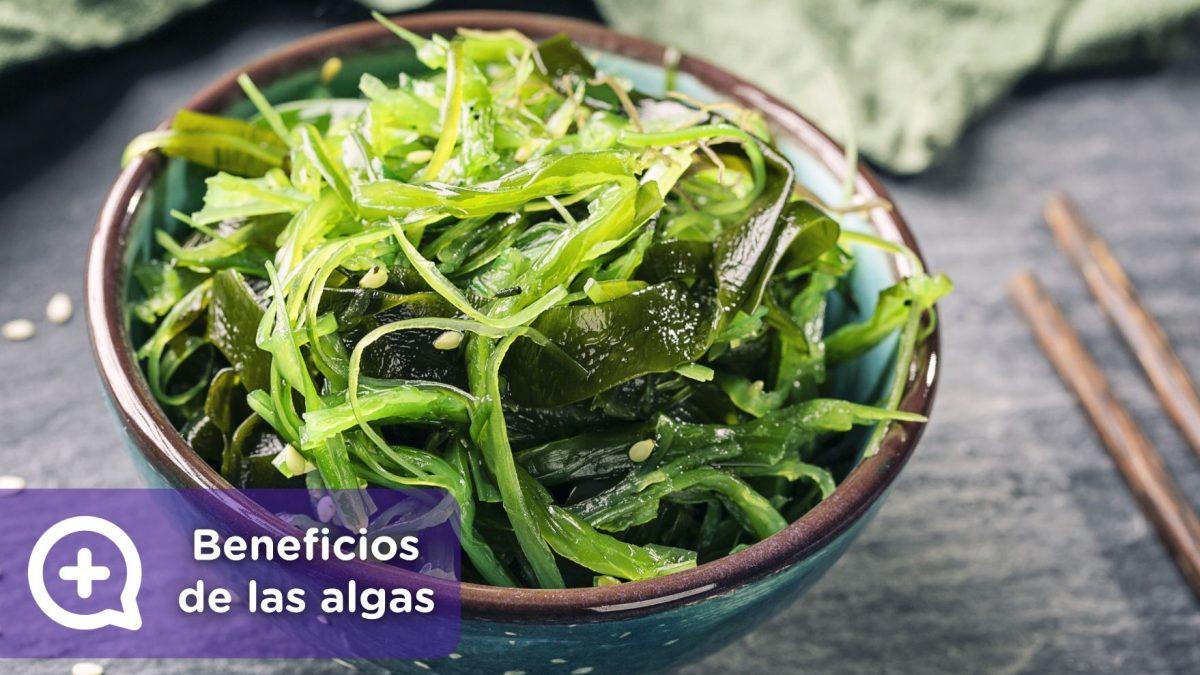 Beneficios de las algas. nutrición, vitaminas, mediquo. Tu amigo médico. Chat médico.