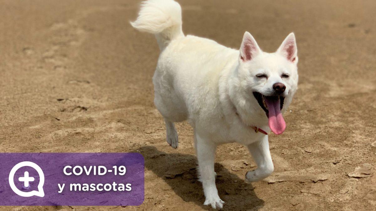 Mascotas, Confinamiento, aislamiento domiciliario por covid-19. recomendaciones generales. coronavirus, virus, medidas de seguridad, estado de alarma. OMS