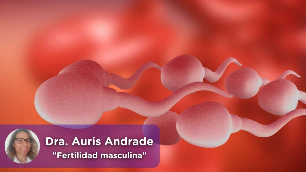 fertilidad masculina, espermatozoides, embarazo, urología, ginecología, mediquo, salud, auris andrade