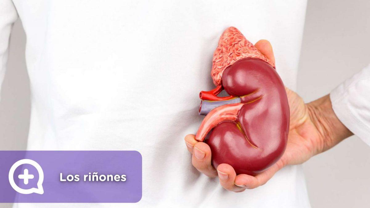 5 síntomas que indican que los riñones no están funcionando bien. Salud, mediQuo, chat médico, asesoría digital.