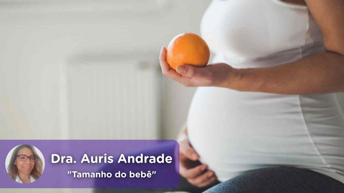 tamanho do bebê, evolução da gravidez, ginecologia, obstetrícia, auris andrade, saúde, médico