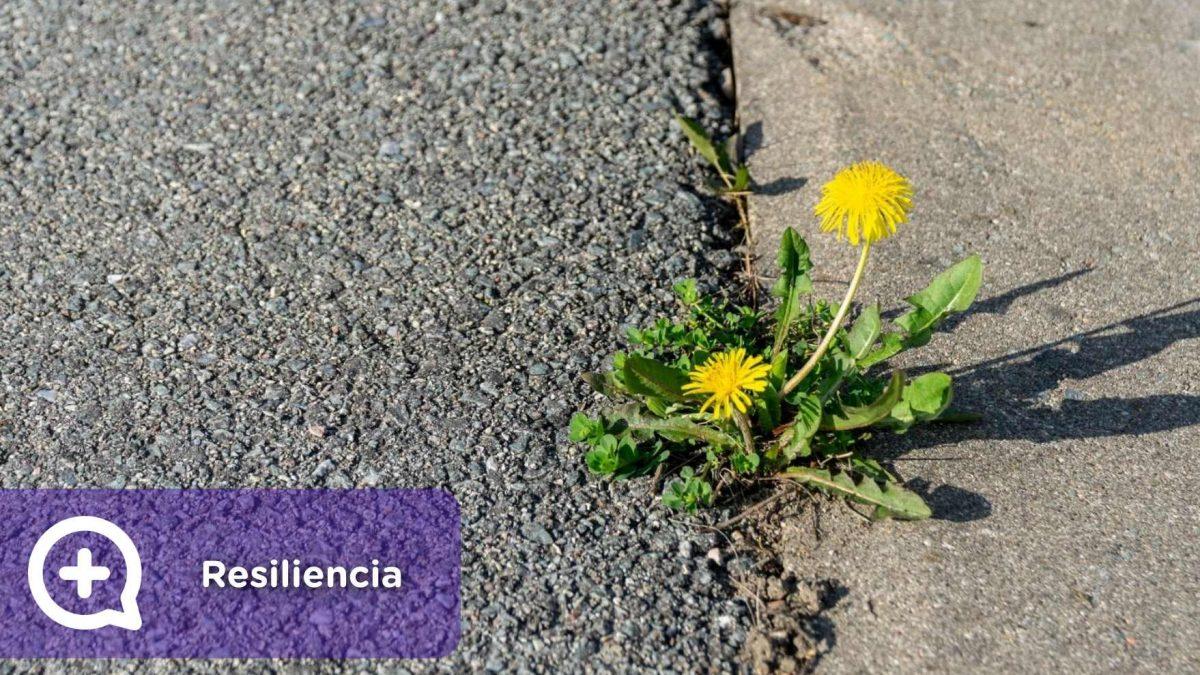 resiliencia, resilientes, personas, psicología, mediQuo, salud mental, salud