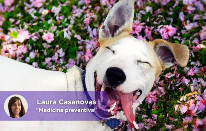 Medicina preventiva mascotas_MediQuo. Laura Casanovas. Chat médico, consulta veterinaria online, perros, gatos, animales domésticos, salud